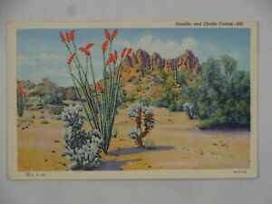Vintage Teich Linen Postcard Ocotillo and Cholla Cactus New Mexico USA Unposted