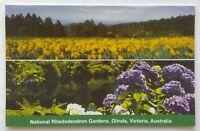 National Rhododendron Gardens Olinda Victoria Australia Postcard (P320)