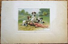 Dog Family w/Puppies/Puppy 1910 Color Litho Postcard, Postally-Used in France