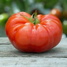 25 graines de Tomate Beefsteak Méthode BIO seeds plantes légumes potager ancien