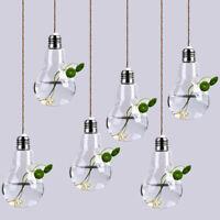 6 Pack Light Bulb Terrariums w/ Strings Hanging Glass Vase Air Plant Holder Pot