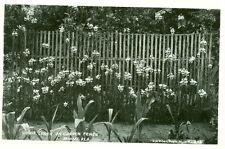 Miami,FL. Vanda Teres on Garden Fence,a G.W. Romer RPPC