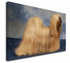 More details for lhasa apso dog x-large 30