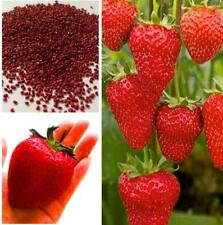 Wholesale Amazing Excellent 150Giant Strawberry Seeds High in Vitamin Fruit Hot