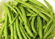 100 USDA organic Blue Lake bush beans non-GMO heirloom seeds Oregon USA-grown
