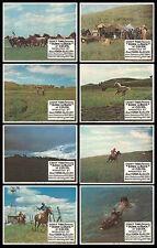 BORN TO BUCK orig1968 lobbycard set CASEY TIBBS/WILD HORSE ROUNDUP 11x14 posters