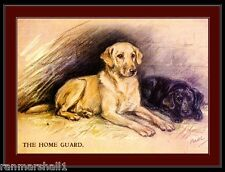 English Picture Print Labrador Retriever Dog Dogs Puppy Puppies Poster Art