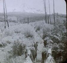 Mount Hood, Oregon (Wagon Team), Antique Magic Lantern Glass Photo Slide