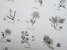 1803 Botany Orders Engraving Print Rees Plate IV