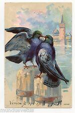 Pigeons . Oiseaux . Dove . ハト . 鴿子