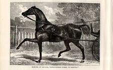 Stampa antica CAVALLO PUROSANGUE EDMOND con FINIMENTI 1892 Old print horses