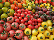 Tomato Rainbow Mix (70seeds) - Organic Heirloom seeds by Life-Force Seeds