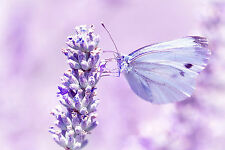 STUNNING Abstract Lavender Field Butterfly #25 Canvas Picture Wall Art A1
