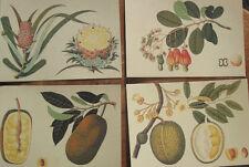 Set of 200 Postcards Reproduction Antique Botanical Engravings - NOS