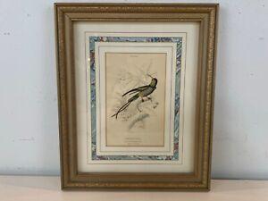 "Ant ""Trochilus Pella"" Topaz Throated Hummingbird William Lizars Framed Engraving"