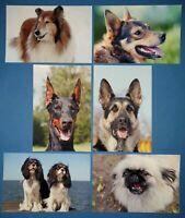 Set of 6 NEW Animal Postcards, Dogs 50L
