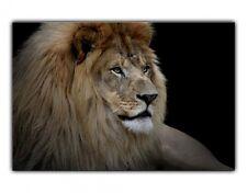 Alu-Dibond Wandbild Löwe Afrika Flur Wohnzimmer Schlafzimmer Silbereffekt wb003