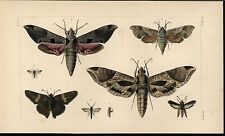 Beautiful Butterflies Flying Entomology 1862 antique engraved hand color print
