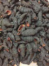 3 LB Dry red meat sea cucumber skin Cucumaria Frondosa