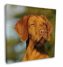 """Hungarian Vizsla Wirehaired Dog 12""""x12"""" Wall Art Canvas Decor, Pict, AD-HWV1-C12"""