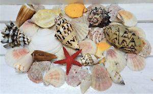 Muscheln Muschelmix Seestern maritime Deko verschiedene Sorten
