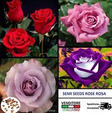SEMI di Rosa Rose Fiori Fiore Giardino Piante seed seeds rosse bianca rara plant
