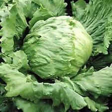 Lettuce Great Lakes 659 Vegetable Seeds