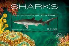 Micronesia- Sharks Stamp -  Souvenir Sheet MNH