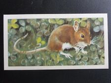 No.33 LONG TAIL FIELD MOUSE - British Wild Life (BBTL) by Brooke Bond & Co. 1958