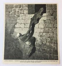 1885 magazine engraving ~ INDIA NATIVE USING LIZARD TO CLIMB A WALL