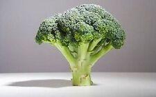 DE CICCO BROCCOLI Di Cicco Brassica Oleracea Capitata Vegetable Seeds