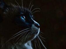 ANIMAL PHOTO CAT HEAD BLUE EYES DARK LARGE WALL ART PRINT POSTER PICTURE LF1886