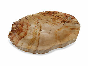 Soap Dish Natural Stone 3 7/8x5 7/8in Petrified Wood Accessory Bathroom Modern