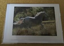 Blank Greetings Card/Notelet - Grey Horse