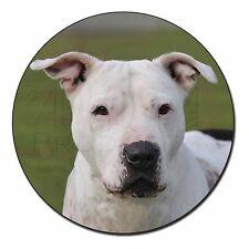 American Staffordshire Bull Terrier Dog Fridge Magnet Stocking Filler, AD-SBT5FM