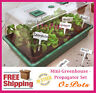 Complete Mini-Greenhouse - Propagator Set - Great for Propagation & Seedling