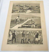 large 1889 magazine engraving ~ ALGERIA, Plague of Crickets