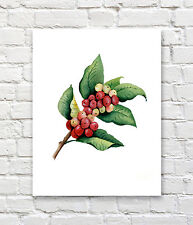 Coffee Plant Art Print Watercolor Painting by Artist DJR