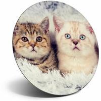 Magnet 14275 Neu Cute Cats Club 8 X 6 cm