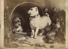 ANTIQUE ALBUMEN OF DOGS, SOME GROWLING. NOT FROM LIFE.