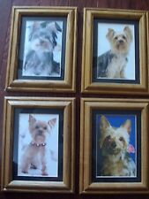 Set of 4 Pictures of Yorkies Framed Photos Yorkshire Terrier Puppy Dogs