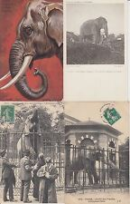 ELEPHANTS ANIMALS ANIMAUX 85 CPA (mostly pre-1940)