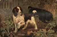 Spaniel Dogs - TUCK Oilette Drummond c1910 Tuck Postcard
