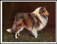ROUGH COLLIE EARLY CHAMPION LOVELY VINTAGE STYLE DOG ART PRINT POSTER