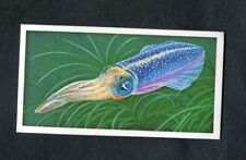 Brooke Bond Trading Card: Incredible Creatures: No.19 Luminous Squid