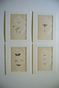 Lot of four, 1794 Copper plate engravings of Natural history of British Insects