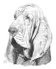 Bloodhound Print