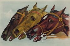 Pictures of Horses drawing painting collector images 420 Vintage photos CD  DVD