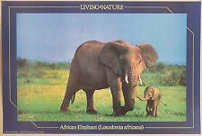 (PRL) 1990 NATURE AFRICAN ELEPHANT ELEFANTE VINTAGE AFFICHE PRINT POSTER ART '90