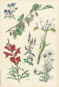 Rough Sketches from Nature: Plate 29 by Henry Ryan, c1860